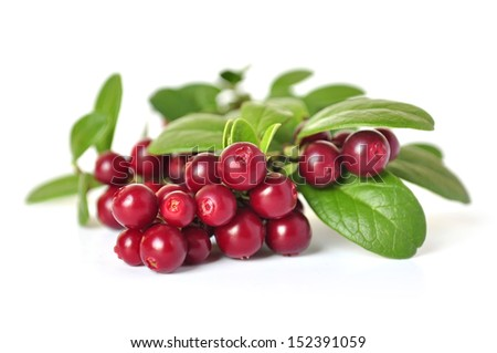 Cowberry isolated on white background #152391059