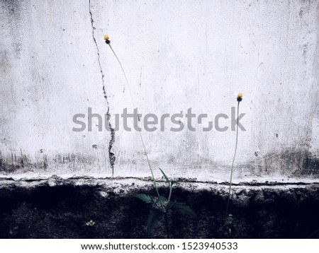 Minimalistic flower photoshoot can be used as wallpapers, background, backdrop, or any publication printout