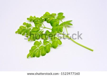 Moringa oleifera (daun kelor) isolated on white background #1523977160