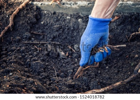 Gloved hand of a man pulling up a root in freshly dug over soil in a gardening and horticulture concept #1524018782