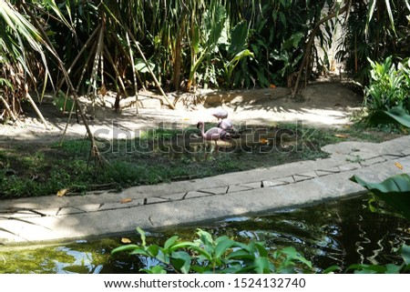 "Flamingo bird or ""Phoenicopterus"" beside the river in zoo #1524132740"