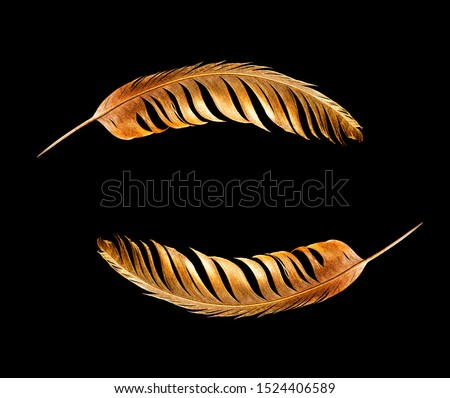 The feather is covered with gold paint close-up. Pen for calligraphy. Golden feather. #1524406589