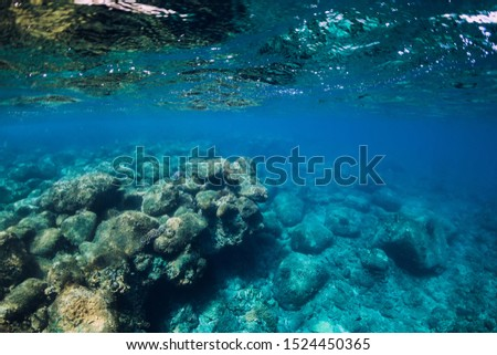Tranquil underwater scene with copy space. Transparent ocean #1524450365