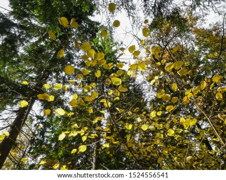 Golden autumn in the peaceful forest of Eastern Europe. Natural colors of autumn mixed forest #1524556541