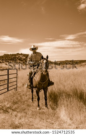 Paulina, Oregon - 8/7/2008: A cowboy on his horse is heading out to a pasture to move cattle to an adjacent pasture on a ranch in eastern Oregon #1524712535