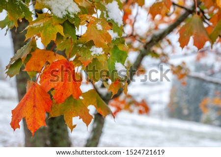 Beautifiul landscape with first snow in the forest #1524721619