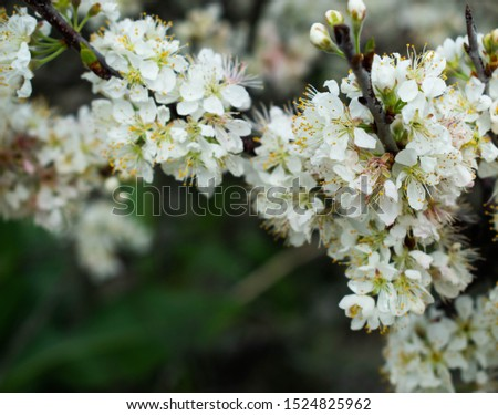 upclose picture of pretty white flowers  #1524825962