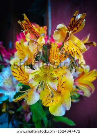 Detail of beautiful ecuadorian yellow orchids #1524847472