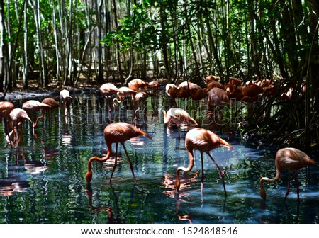 Flamingos, inhabit both hot and cold areas, in mountains, plains, lakes, lagoons and swamps. They feed on small insects, crustaceans and algae. #1524848546