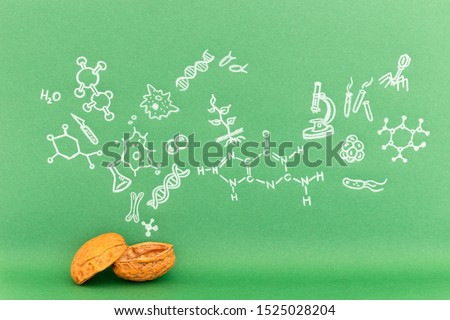 Concept of the phrase biology in a nutshell. Biological formulas and symbols drawn on green paper with walnuts #1525028204