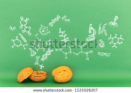 Concept of the phrase biology in a nutshell. Biological formulas and symbols drawn on green paper with walnuts #1525028207
