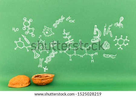 Concept of the phrase biology in a nutshell. Biological formulas and symbols drawn on green paper with walnuts #1525028219