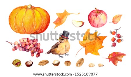Set of thanksgiving elements - pumpkin, cute bird in hat, nuts, maple leaves, autumn fruits. Watercolor collection