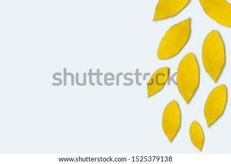 sunflower petals background, yellow petals on a white background, sunflower petals, sunflower petals on a white background #1525379138