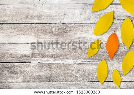 sunflower petals background, yellow petals on a white background, sunflower petals, sunflower petals on a white background #1525380260