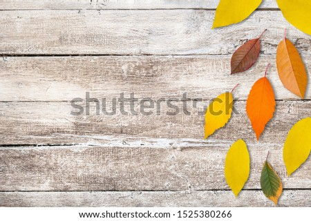 sunflower petals background, yellow petals on a white background, sunflower petals, sunflower petals on a white background #1525380266