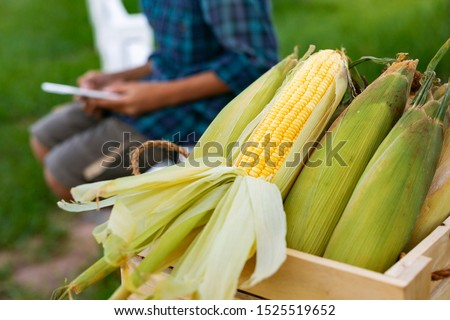 Fresh corn organic asian young smart farmers picking and post sell product results on social media from countryside agriculture farm #1525519652