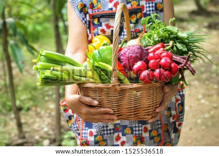 Woman is holding wicker basket with Mixed organic vegetables (red cabbage,radish,coriander, radish,spring onion and sweet peppers) with green farm background.Pesticide free,healthy food,Eco concept. #1525536518