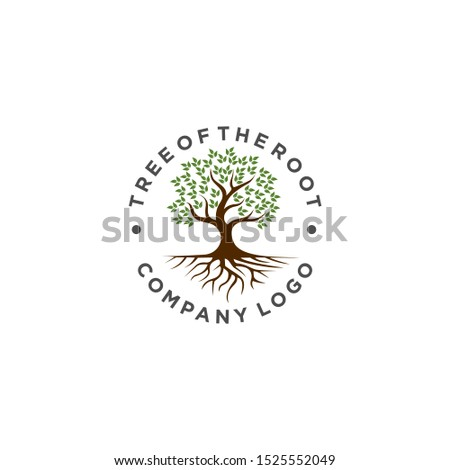 root of the tree logo. creative natural logo template. #1525552049
