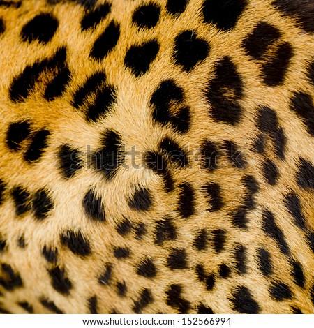 Leopard fur background