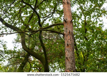 On this  tree, the bark changes from brown-gray tones to reddish tones #1525675682