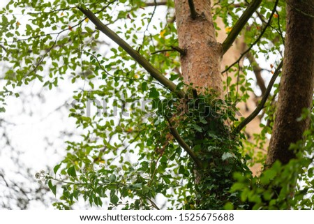 On this  tree, the bark changes from brown-gray tones to reddish tones #1525675688