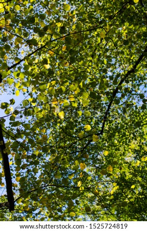 Green leafs on sunny day in autumn #1525724819