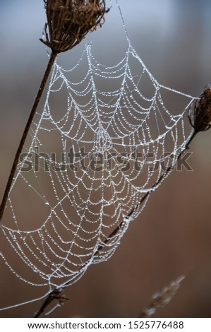 A spider web with droplets of frozen water on it #1525776488