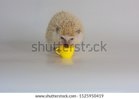 A little hedgehog drinks from a yellow mug. The decorative rodent eats. Domestic rodents closeup.