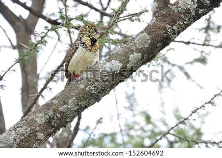 Small Bird #152604692