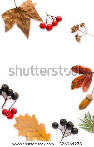 Autumn composition.  branches, dried leaves, berries on white background. Autumn, fall concept. Flat lay, top view #1526064278