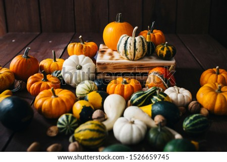 Group of colorful halloween decoration pumpkins at brown background #1526659745