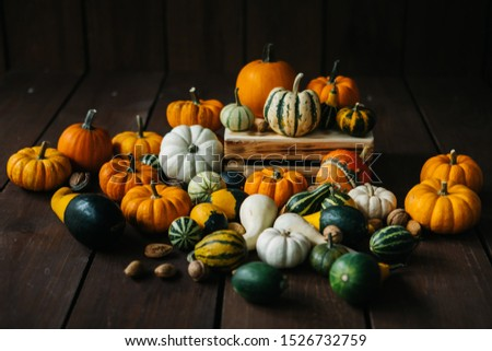 Varieties of pumpkins and squashes collection. View of squash and pumpkins for Halloween  #1526732759