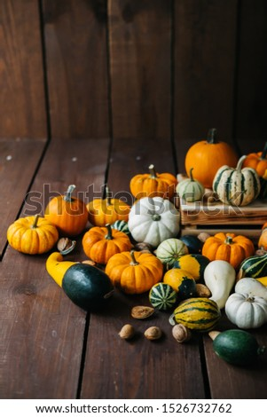 Varieties of pumpkins and squashes collection. View of squash and pumpkins for Halloween  #1526732762