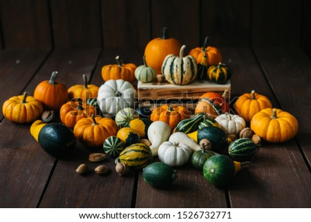 Varieties of pumpkins and squashes collection. View of squash and pumpkins for Halloween  #1526732771