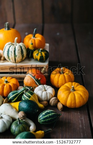 Varieties of pumpkins and squashes collection. View of squash and pumpkins for Halloween  #1526732777