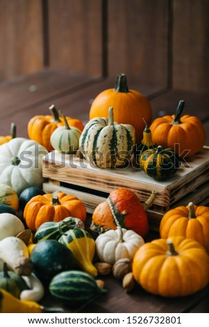 Varieties of pumpkins and squashes collection. View of squash and pumpkins for Halloween  #1526732801