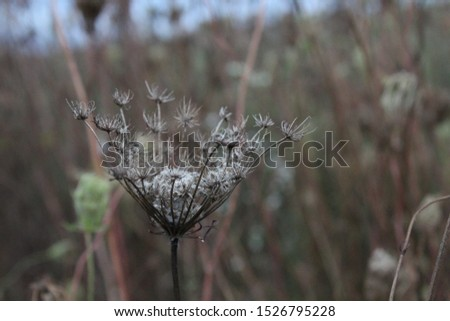 selective focus on single plant in a field #1526795228