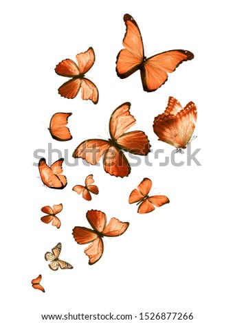 Flock of flying butterflies isolated on white #1526877266