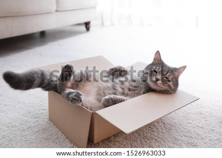Cute grey tabby cat in cardboard box on floor at home #1526963033