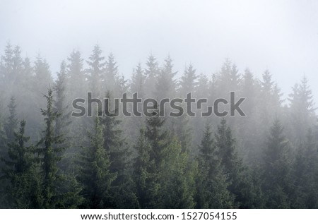 Misty fog in pine forest on mountain slopes in the Carpathian mountains. Landscape with beautiful fog in forest on hill. #1527054155