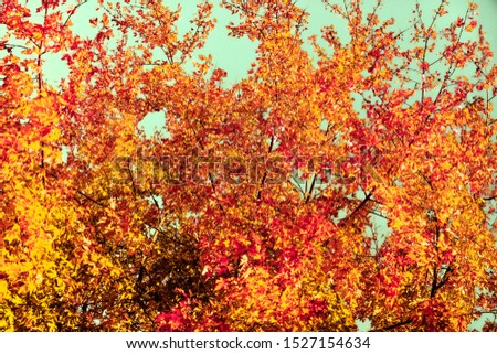 Seasonal travel, retro backdrop and rural environment concept - Beautiful autumn landscape background, vintage nature scene in fall season #1527154634