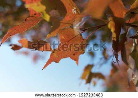 Autumn natural leaf forest beauty #1527233483