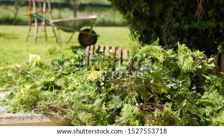 Gardener male cutting trees with electric scissors and putting inside the wheelbarrow. Dry bushes in the yard, electric trim for working in the garden. Horticulture concept #1527553718