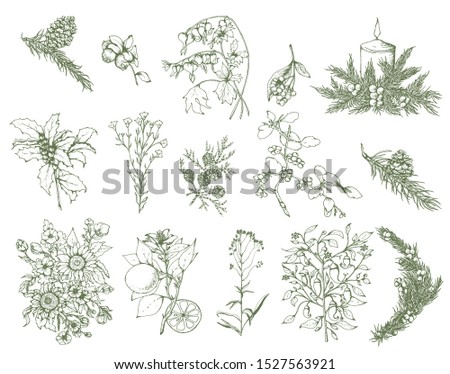 Herbal illustration on label packaging design. Hand drawn vector botanic set with branch, flowers, cone. #1527563921