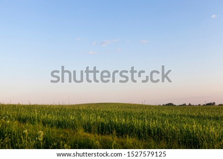 green grass in summer, landscape near agricultural field, European countries of Eastern Europe Royalty-Free Stock Photo #1527579125