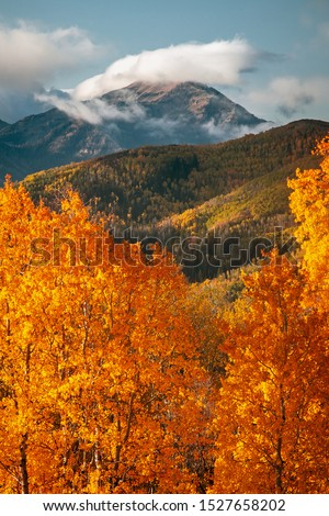 Golden vertical fall colors in the Wasatch Mountains, Utah, USA.