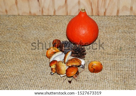 Fall picture with hubbard squash, slippery jacks mushrooms and pine cones on a natural background.