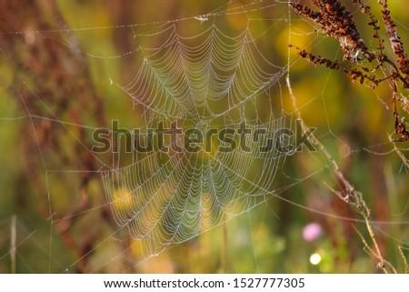 Spider webs in between culms #1527777305