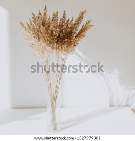 Beige reeds in vase standing on white table with beautiful shadows on the wall. Minimal, styled concept for bloggers. Parisian vibes. Royalty-Free Stock Photo #1527979001